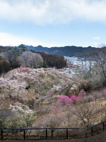 Yoshino10_2
